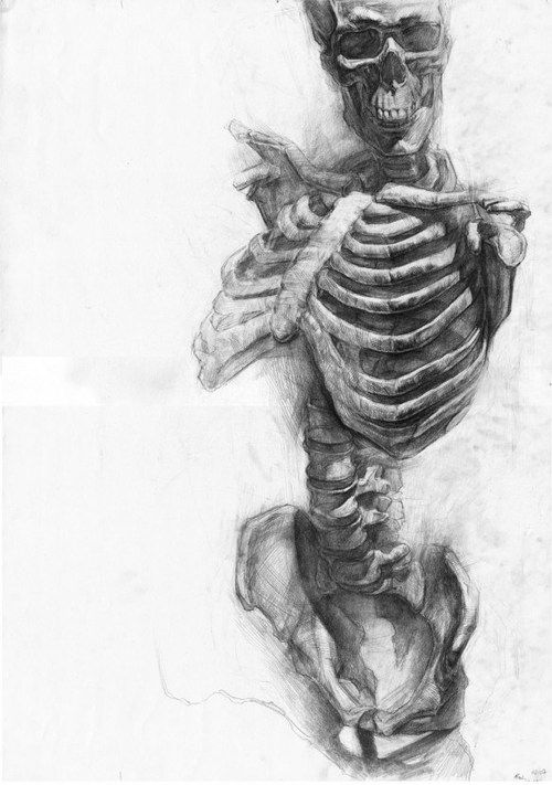 Drawn skeleton human form art Skeleton rib cage rib morbid