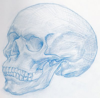 Drawn sleleton side view To How 50 Skull Drawn