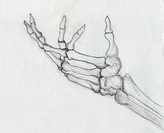 Drawn sleleton side view View side Hand Skeletons skeleton