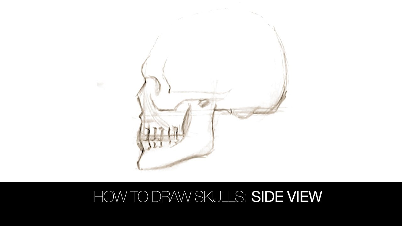 Drawn sleleton side view Skulls: Draw to How Skulls: