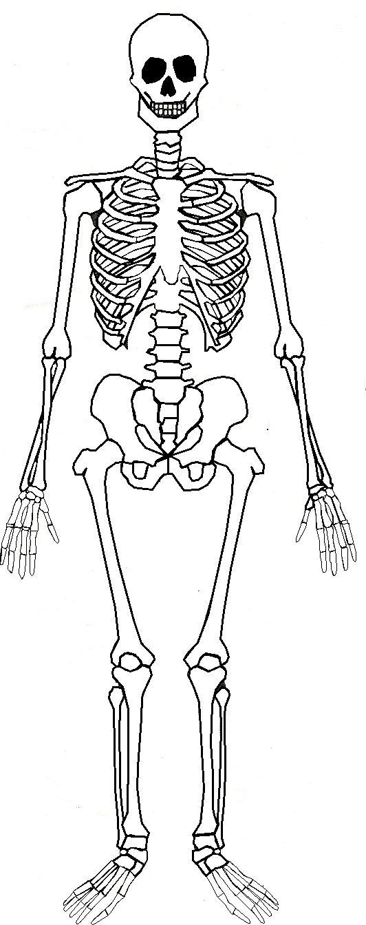 Sleleton clipart pencil work On part skeleton Best 25+