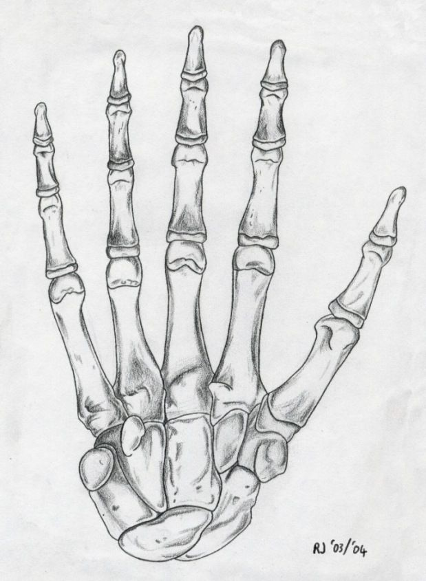 Drawn skeleton hand drawn Drawing Skeleton ideas best The