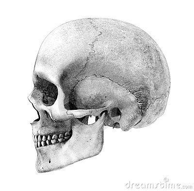 Drawn profile skull Via Linda Skull side Best