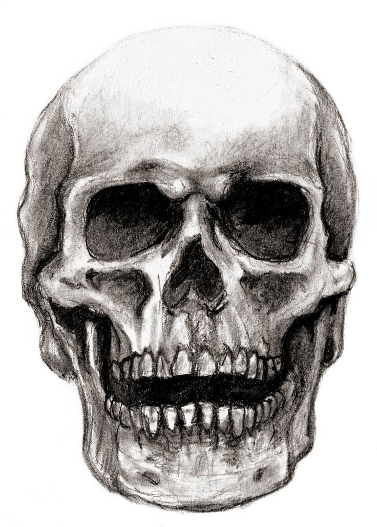 Drawn ssckull skeleton Drawings on of see skull