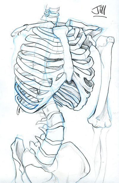 Drawn skeleton torso JillJohansen JillJohansen by Skeleton Torso