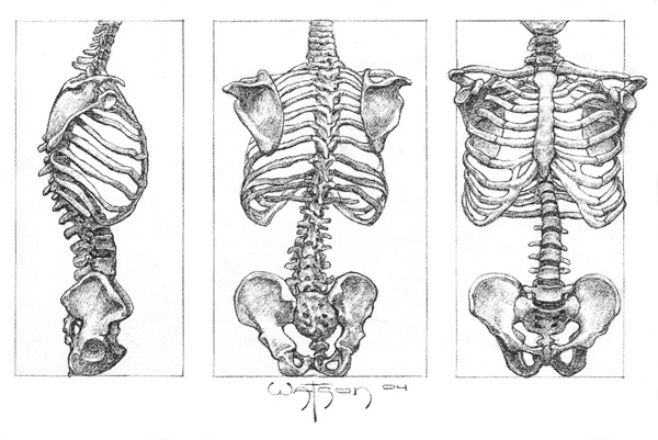 Drawn skeleton torso Parfaite on déluge discovered by