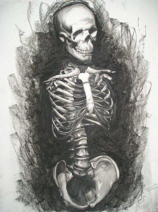 Drawn skeleton torso By Torso DeviantArt Skeleton Skeleton