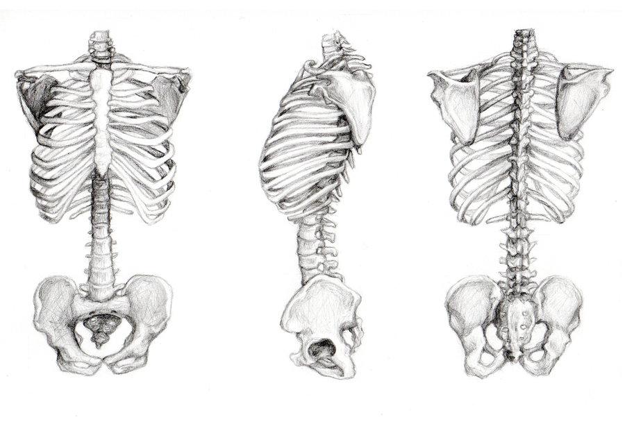 Drawn skeleton torso On skeleton 3pt of by