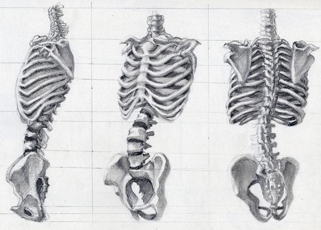 Drawn skeleton torso Bmxchik bmxchik by Skeleton Torso
