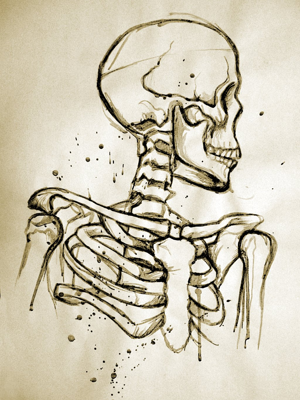 Drawn sleleton traditional Study Skeleton  by Unconventionally