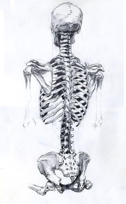 Drawn skeleton back Back on Pinterest about bones