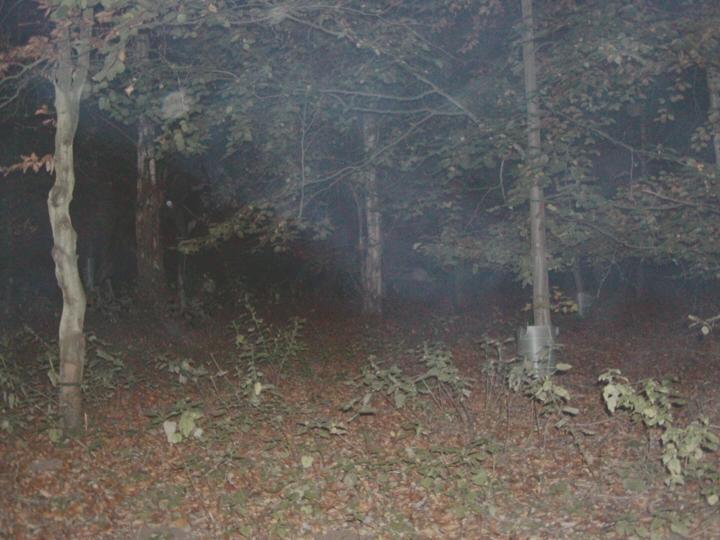 Drawn slender man hidden Slender jpg Man Creepypasta woods