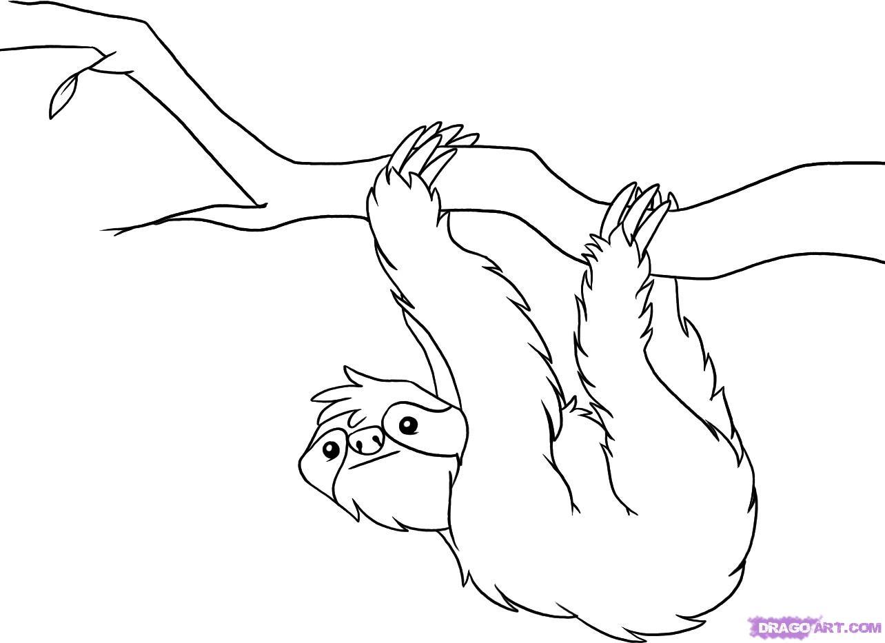 Drawn sloth Sloths and 52 Pin Pinterest