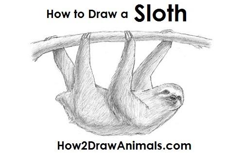 Drawn sloth To how draw Sloth sloth