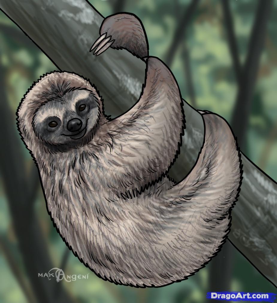 Drawn sloth Forest sloths Sloths draw Animals