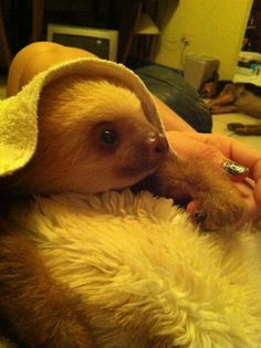 Drawn sloth adorable puppy Day Sloth cuddle this Baby