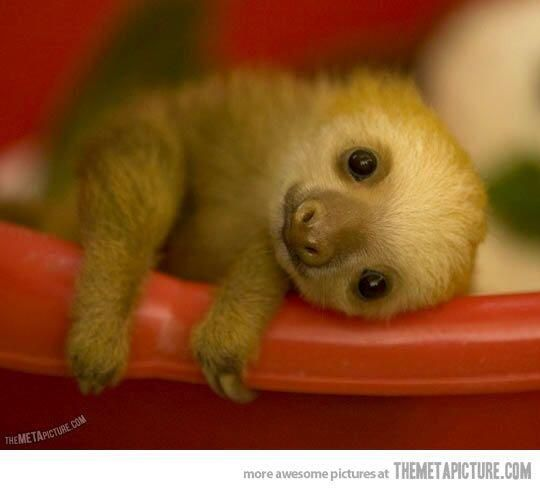 Drawn sloth adorable puppy Ideas of Best Pictures Baby