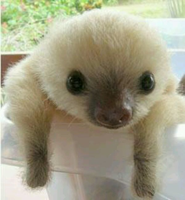 Drawn sloth adorable puppy Is Baby and on Sloth