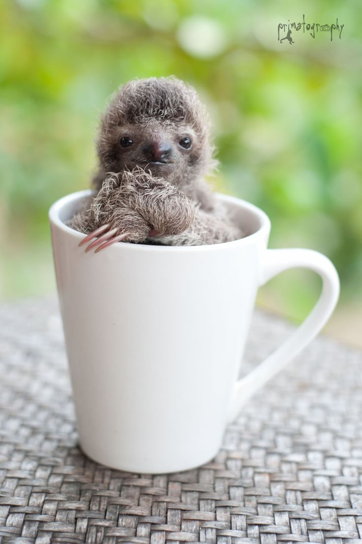 Drawn sloth adorable puppy Cute sloth cup Baby and