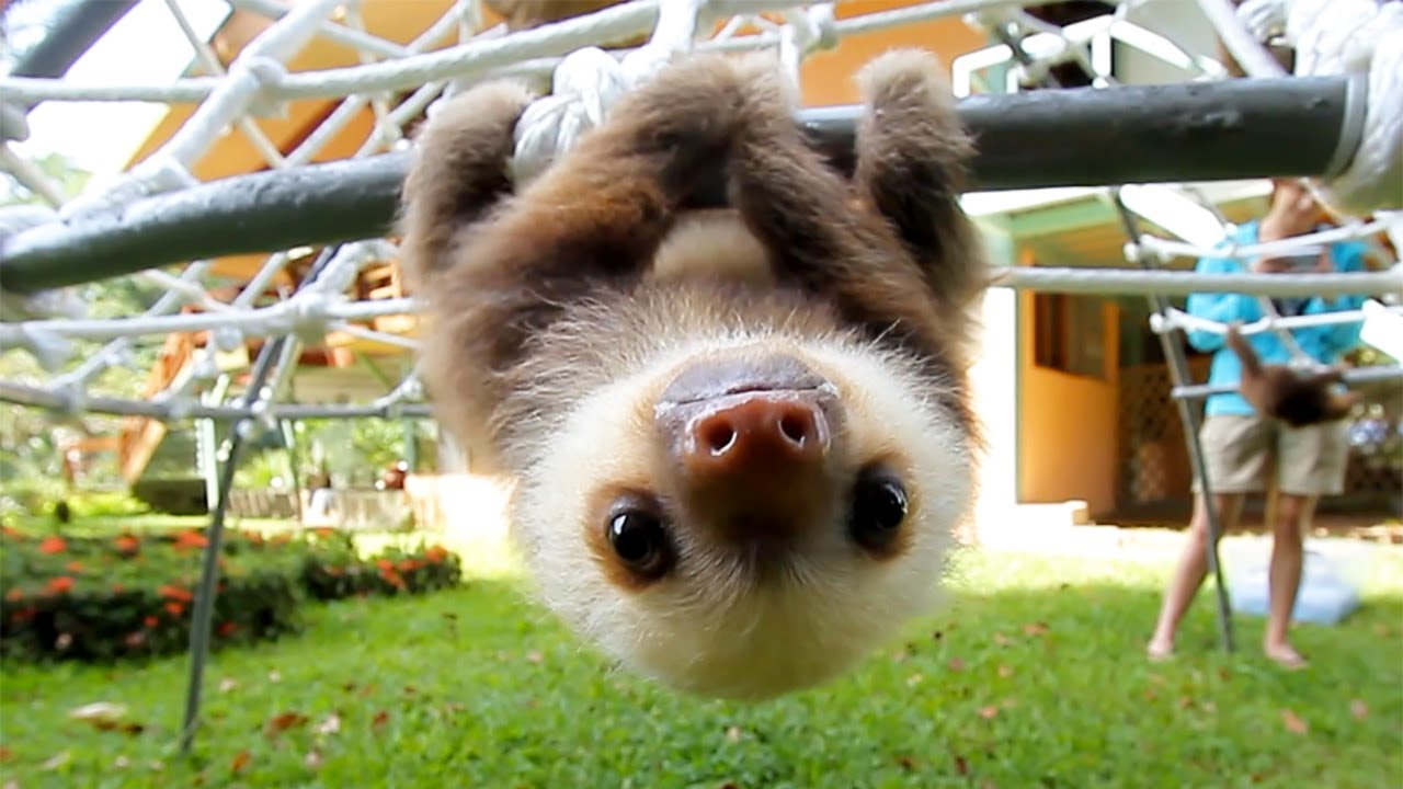 Drawn sloth adorable puppy A Say? Sloth  What