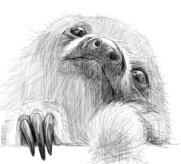 Drawn sloth baby sloth I facebook at best 38