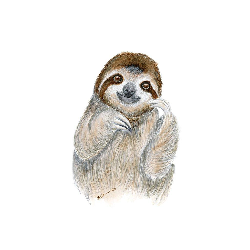 Drawn sloth baby sloth Baby Sloth Baby Toes Animal