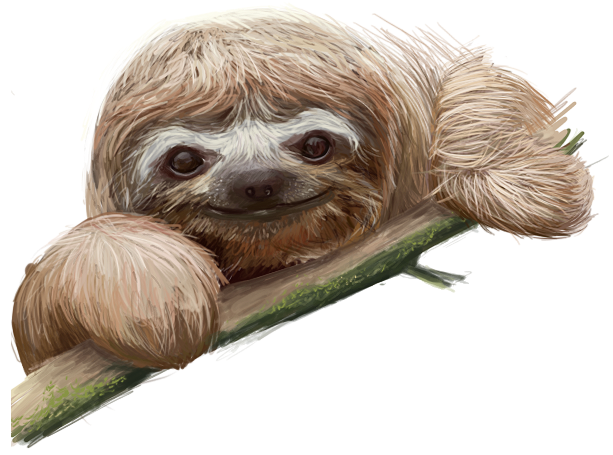 Drawn sloth baby sloth Baby on by DeviantArt Sloth