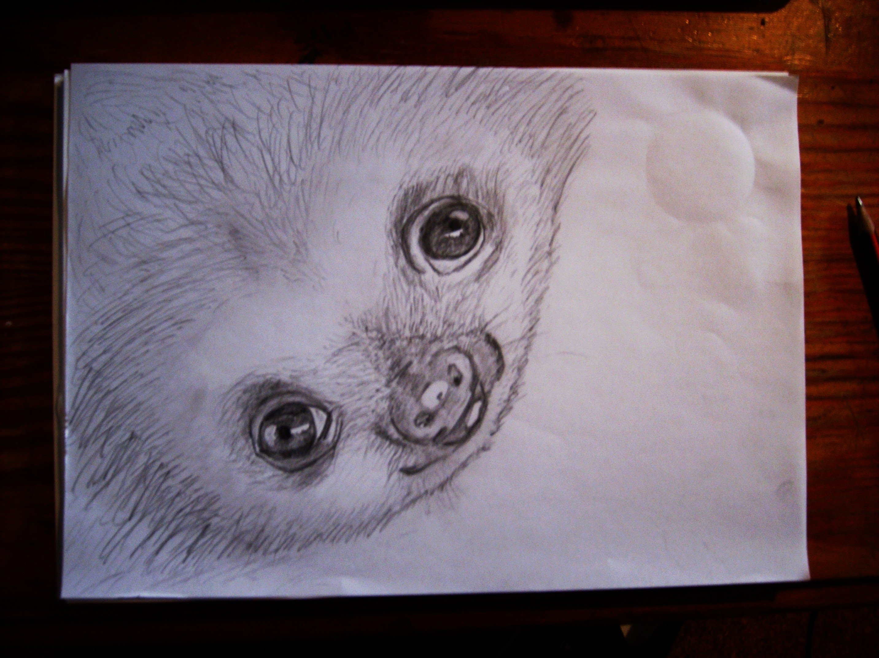 Drawn sloth baby sloth Baby Sloth YouTube speed Sloth
