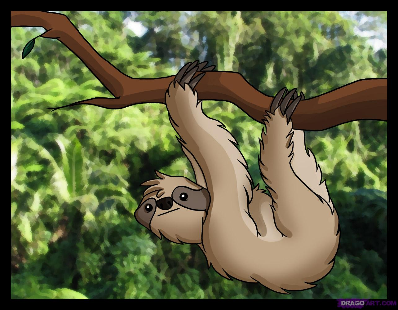 Drawn sloth hanging on tree Rainforest sloth Draw Sloth by