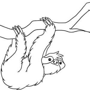 Drawn sloth hanging on tree Of Kids of Coloring Realistic