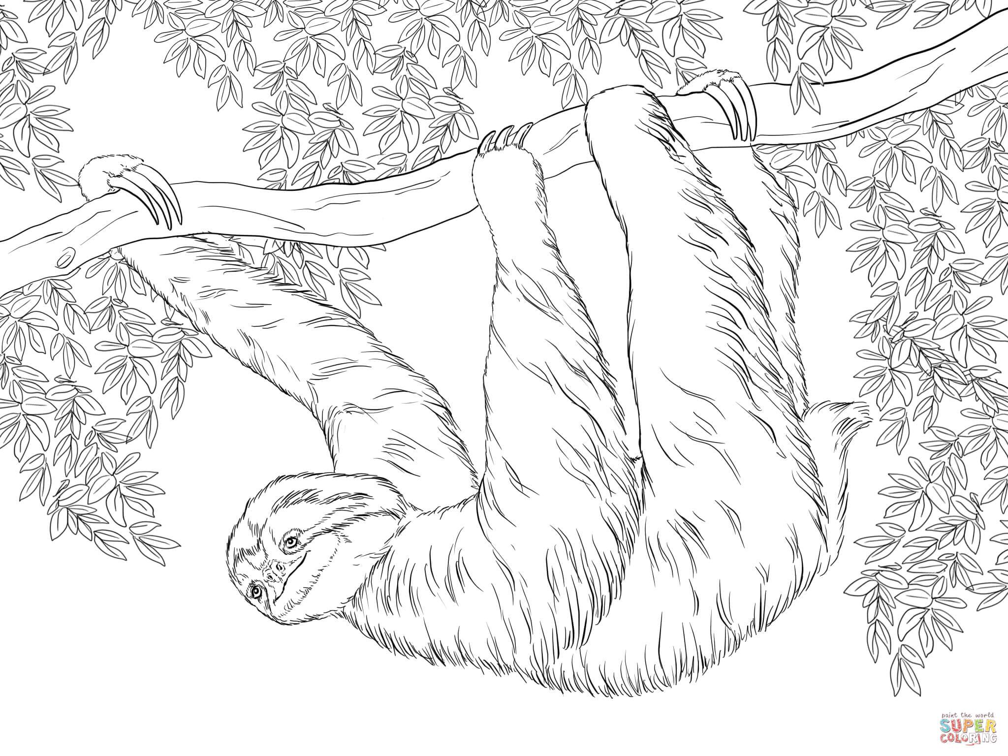 Drawn sloth hanging on tree Three Printable the Click Three