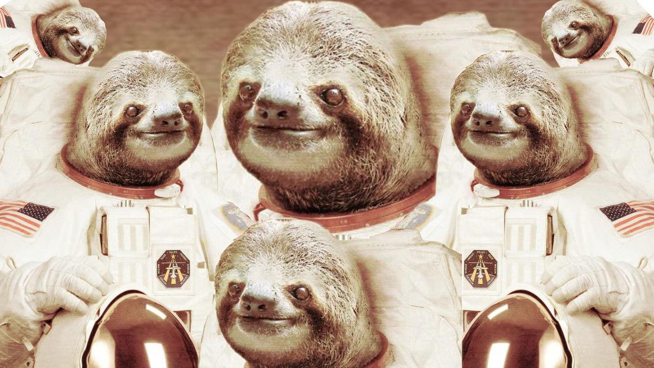 Drawn sloth president Sloths Tumblr Sloth is happiness
