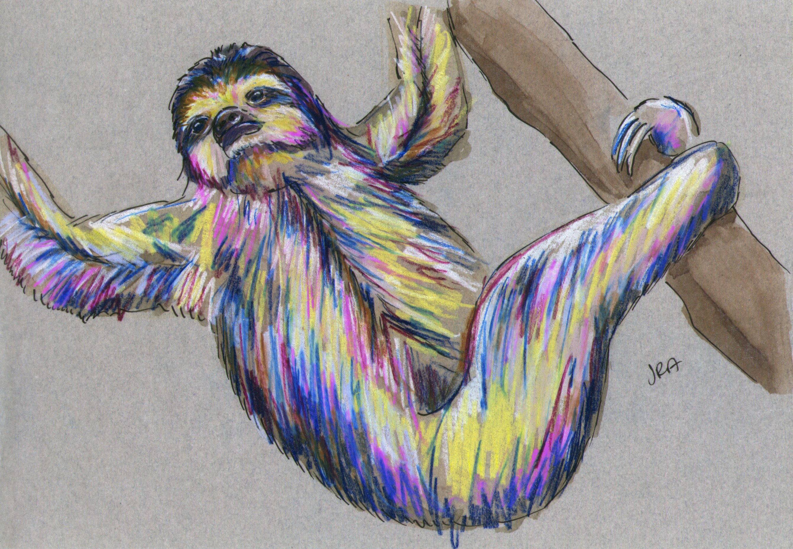 Drawn sloth three toed sloth Described Pygmy  Toed Sloth