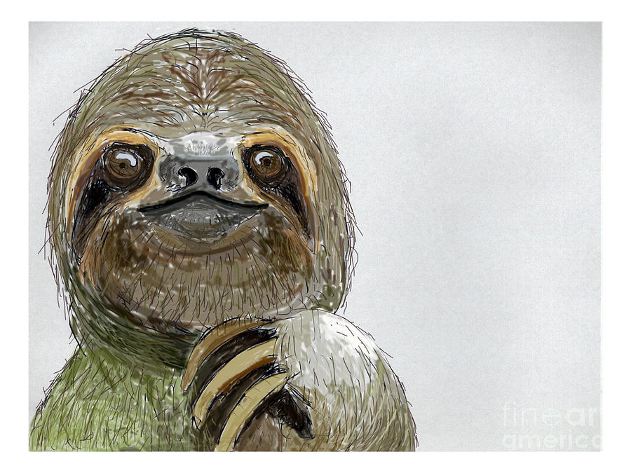 Drawn sloth three toed sloth Sydney Digital toed Gaffen Three