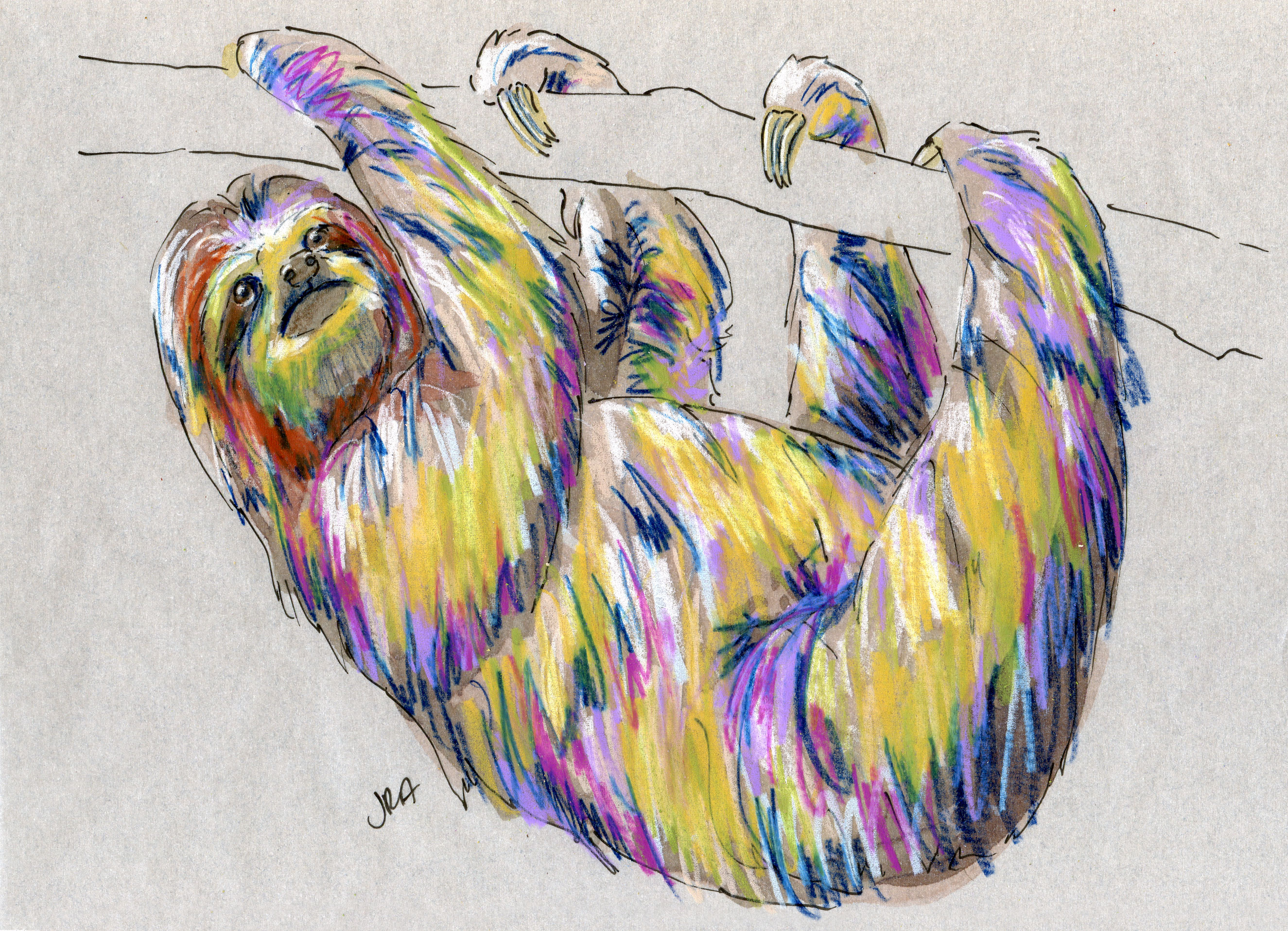 Drawn sloth three toed sloth The  sloth Sloth Three