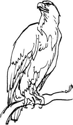 Drawn hawk standing eagle Eagle Magic National Symbol Bald