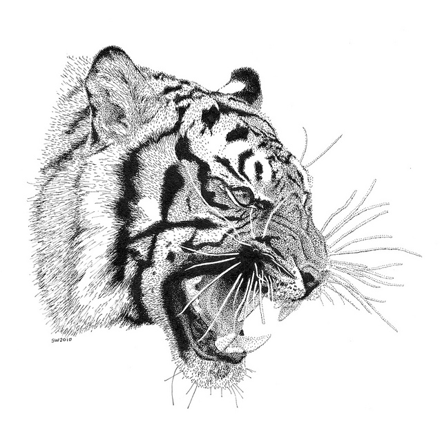 Drawn smokey pen and ink Pen Drawing Ink Tiger and