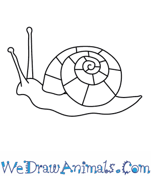 Drawn snail Snail Draw  a How