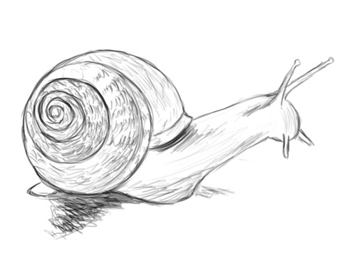 Drawn snail • Snails Daily Drawing Snails