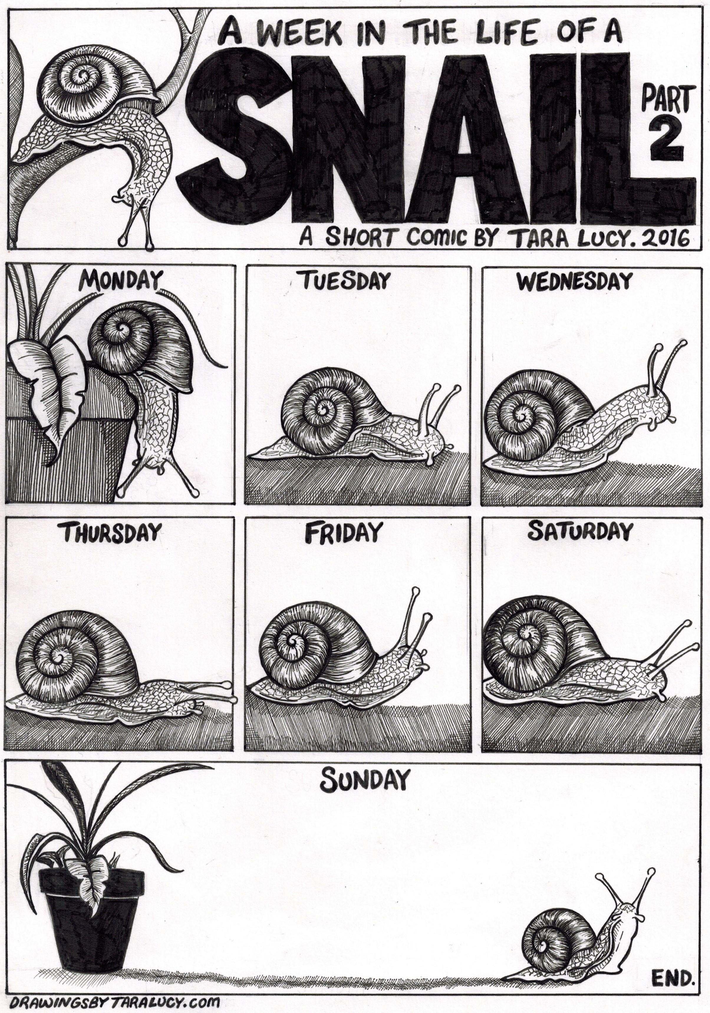 Drawn snail comic DRAWINGS BY TARA ink snail