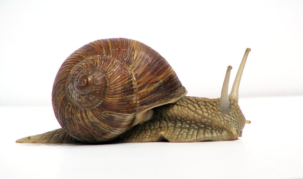 Mollusc clipart land animal #1