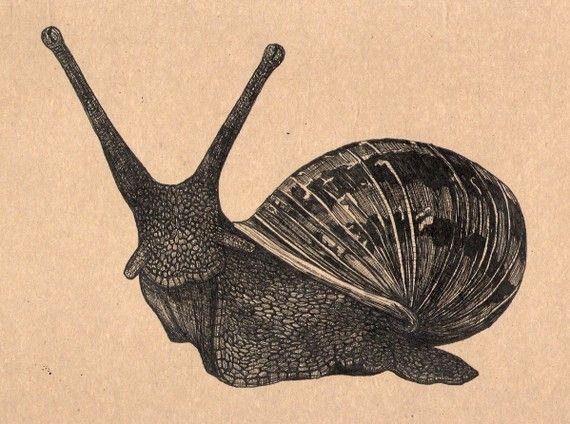 Drawn snail garden snail Snails paper drawing Etsy best