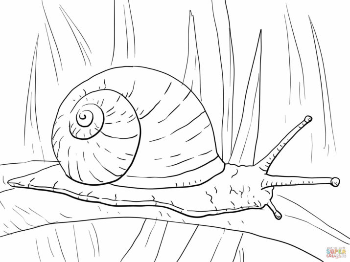 Drawn snail garden snail Version Print Page To Coloring