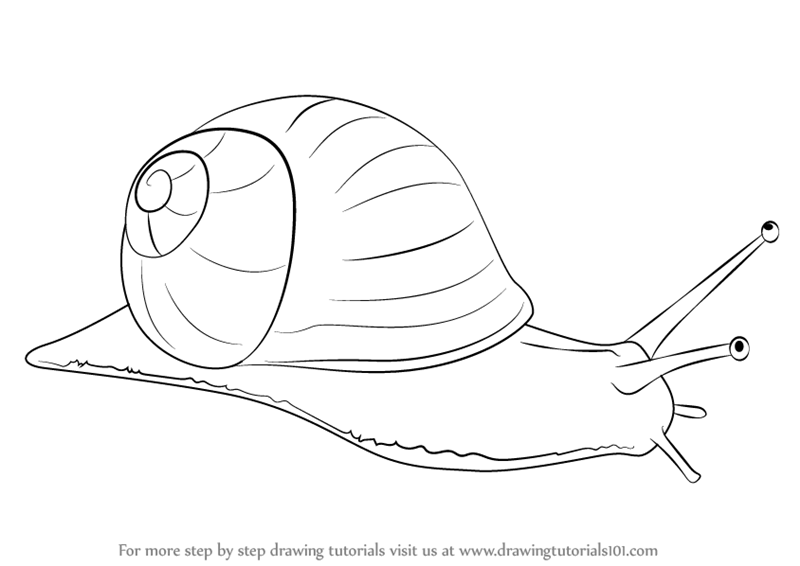 Drawn snail outline (Snails) Drawing to Step by