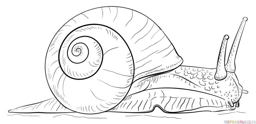 Drawn snail outline Draw step a tutorials a