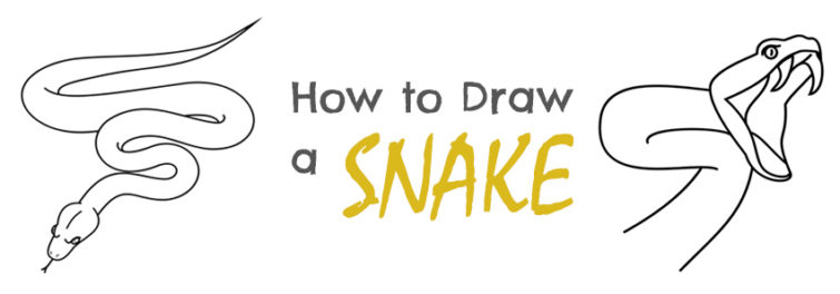 Drawn snail snale How a Snake Draw to