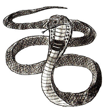 Drawn serpent A 6 Step Draw to