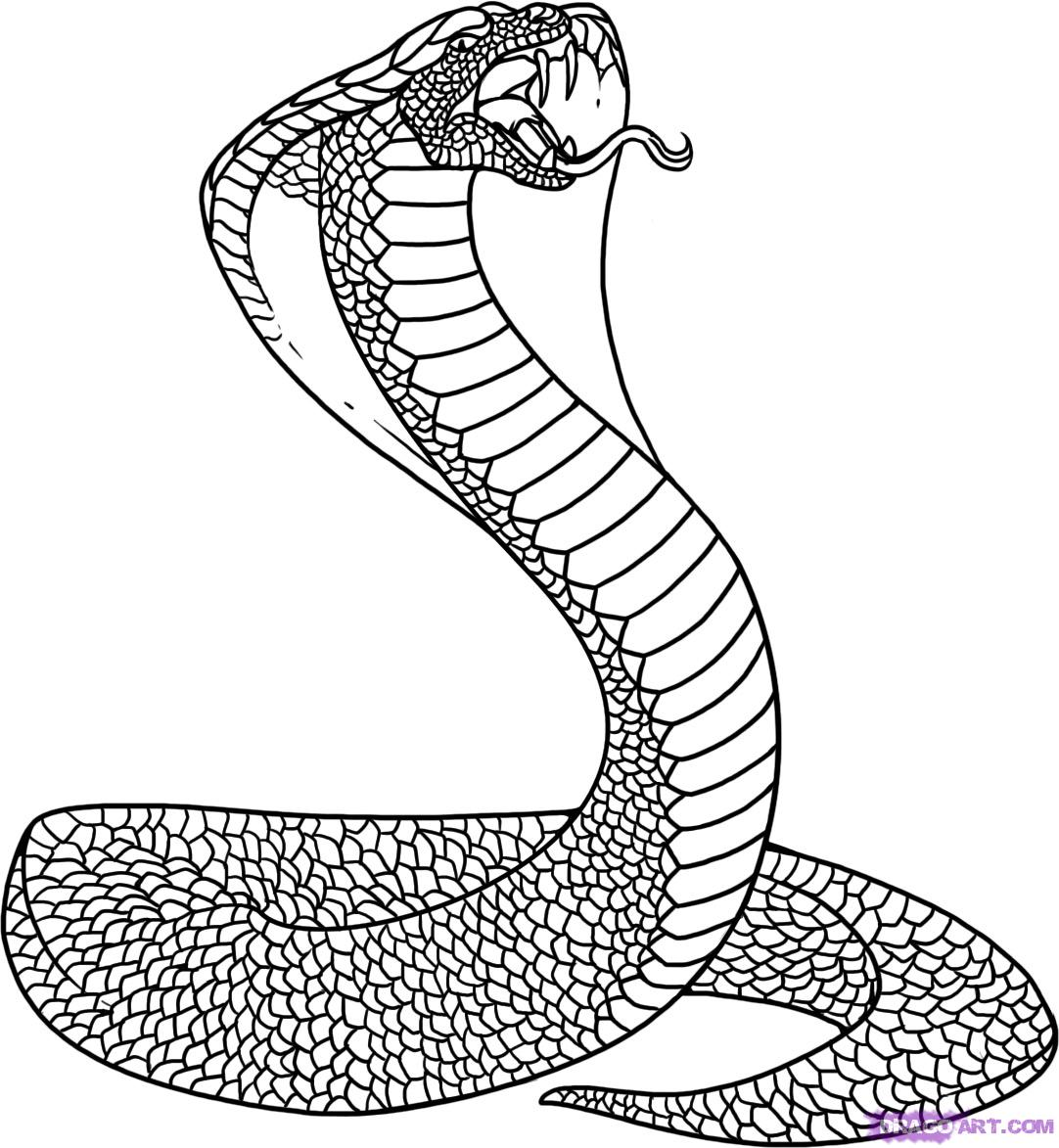 Drawn serpent How Step cobra king draw
