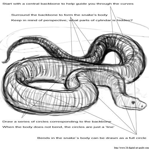 Drawn reptile pencil drawing 1 step Snake Pinterest drawing