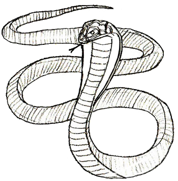Drawn serpent A 5 Step Draw to